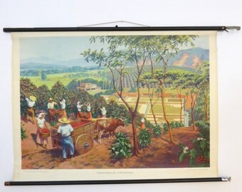 Vintage Coffee Plantation Chart - South American Coffee School Chart - Authentic Pull Down Chart circa 1951