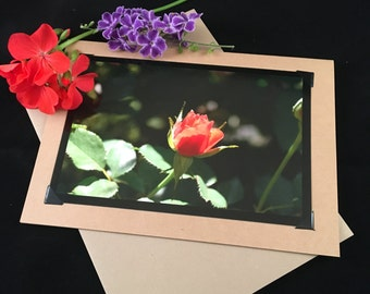 Orange Rose Bud 5x7 Photo Greeting Card- Note Card