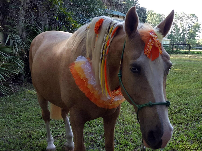 10.Halloween - Miniature Horse   Horse Love.   Pinterest   Mini Horse Costume