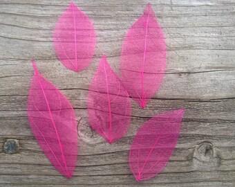 """2.5"""" (5) Bright pink dyed waxwood leaf skeletons, 5 leaves"""