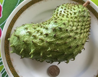 Maui SOURSOP SEEDS-Annona muricata/Graviola organically grown on Maui-easy to grow tree-produces delicious FRUIT & Grow your own Health Tea