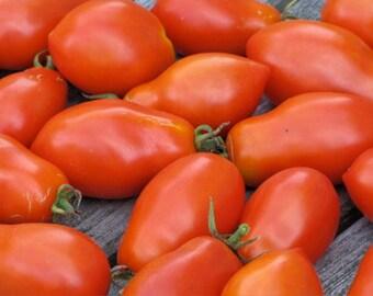Tomato Plant, Martino's Roma