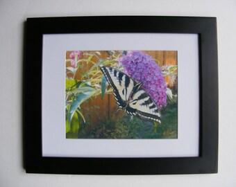 Bashful butterfly 11x14