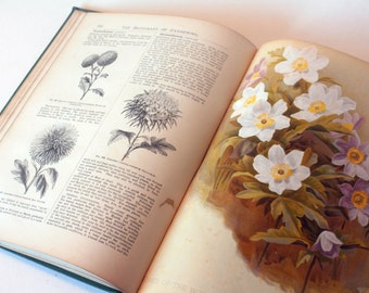Dictionary of Gardening 1900s, Antique Rare Encyclopedia of Horticulture Garden Plants flower guide antique
