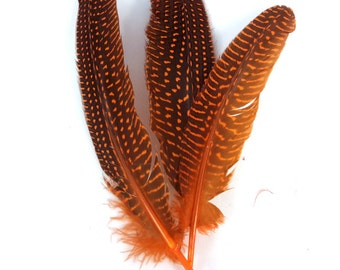 10 pc's x 20cm Orange Guinea Spotted Feathers #1403