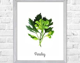 Parsley Watercolour, Herb Kitchen Art Print, Herb Painting, Herb Kitchen Art, Herbs Watercolor Painting, Kitchen Wall Decor, Green Herb Art
