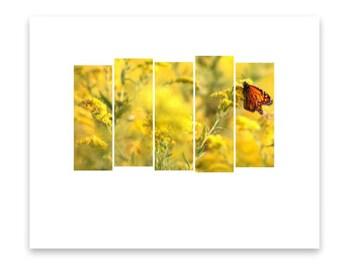 Monarch Gallery Print