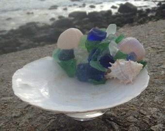 Beach Decor - Scallop Shell Candy Dish (CD010)