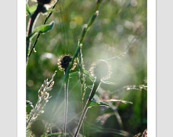 Nature Photography, Dusk Reflections, Wild Flowers, Bokeh Art Print, Dreamy Photo, Wild Meadow, Grassland, Meadow Photography, Hazy Wall Art