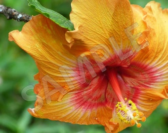Oahu Flower 3.  Instant Download