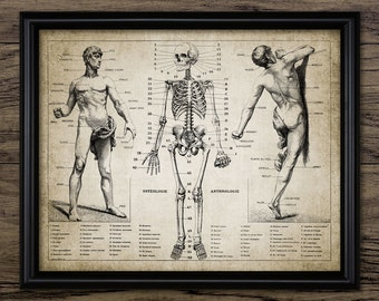 Human Anatomy Print - French Language Human Skeleton Anatomy - Biology Illustration - Printable Art - Single Print #694 - INSTANT DOWNLOAD