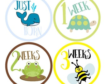 Just Born Baby Stickers / Weekly Stickers / Baby Milestone Stickers / First Year Stickers / Baby Month Stickers / Monthly Baby Stickers Boy