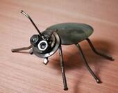 Spoon Beetle