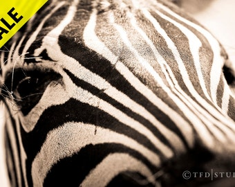SALE! Nature Photography - Zebra 1 - Fine Art