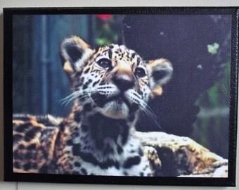 Jaguar Cub photograph on 9x12 canvas