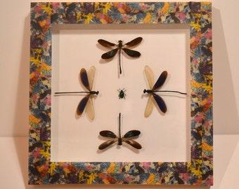 Entomological deco frame