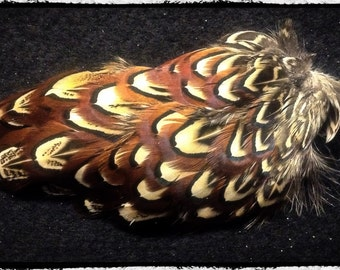 1 pheasant pelt, Ringneck pheasant skin with feathers from the wing