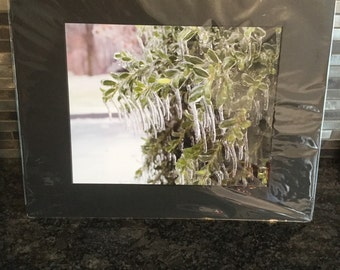 Ice on a tree 8x10 matted