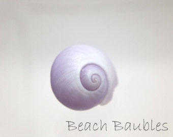 Sea Shell Photography, Seashell print, Beach Decor, Cottage Art, Print and Matted, Made in Hawaii
