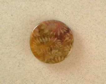 Petrified Coral #0962