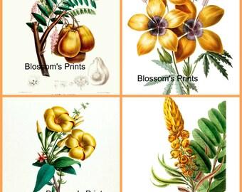 Set of four Antique Flower Prints. Plates 4,8,11,20