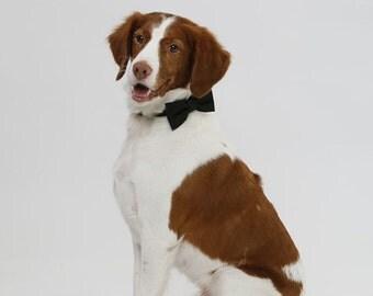 Black bow tie dog. Dog bow tie. Wedding  bow tie. Bow tie solidarity. Size S