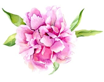 Pink Peony Flower Print of Original  Watercolor painting. Watercolor Peony Wall Art.  Botanical Pink Floral poster.