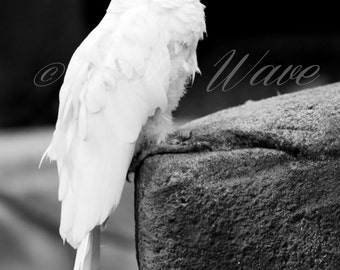 ANIMALsoul COCKATOOS BRANCO-white Parrot, fine art photography, fine art, nature photography, wonderfull nature, bird photos