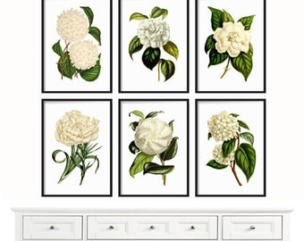 White Botanical Print Set - Large Prints - Botanical Print - Giclee Canvas Art Print - Antique Botanical Prints - White Flowers - Wall Art