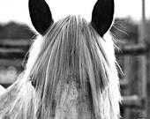 "Square Horse ""Smokey"" Fine Art Print, Wild Horse Art, Rodeo Fine Art, Western Fine Art, Cowboy, Cowgirl Fine Art, Square Wall Art"