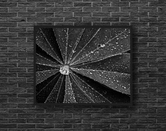 Leaf Photo - Water Drops Photo - Minimalist Photo - Botanical Photo - Black and White - Botanical Wall Art - Wall Decor - Living Room Decor