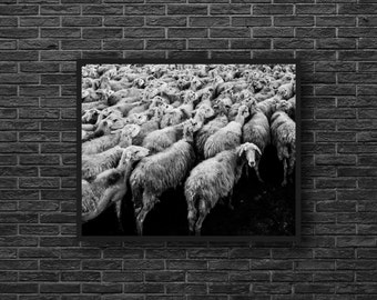Sheeps Photo - Flock of Sheep - Countryside - Rural Photo - Lamb Photo - Black and White - Rural Wall Art - Wall Decor - Farmhouse Decor