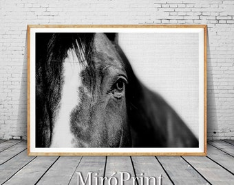 Black Horse Print, Nature Animal, Horse Art, Horse Poster, Horse Decor, Black Horse Art, Horse Art Photography, Black and White Photography