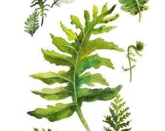 Fern Specimens - print of original watercolor