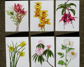 Floral Card Set • Blank Greeting Cards