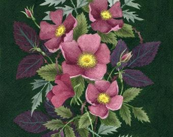 Fine Art Print of Original Watercolor Painting - Bramblerose