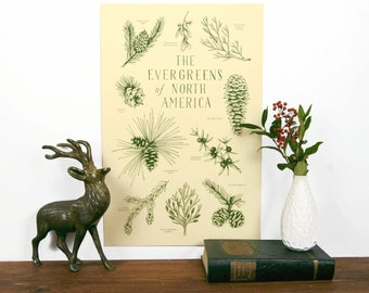 Evergreens of North America Art Print