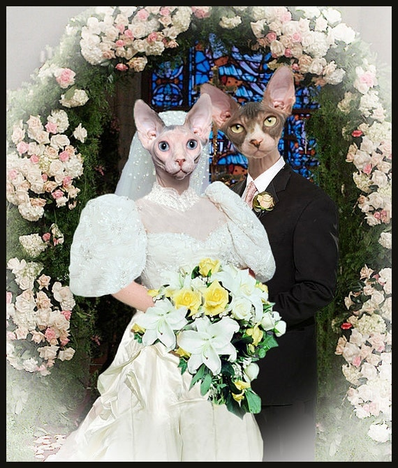 Sphynx cat wedding photo fun funny cats photo collage like this item junglespirit Images