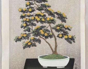 JAPANESE WOODBLOCK Print Nisaburo Ito . Bonsai Chrysanthemum . Uchida NO.00194