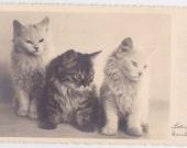 Signed. Vintage German Photo Postcard -- 1930s
