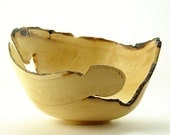 """Natural-Edge Wood Bowl in Salvaged Fig Wood. 8"""" Diameter x 5.25"""" Tall."""