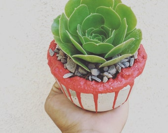 Red little succulent arrangement