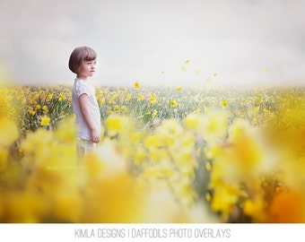 Daffodils Photo Overlays + Free Digital Backgrounds