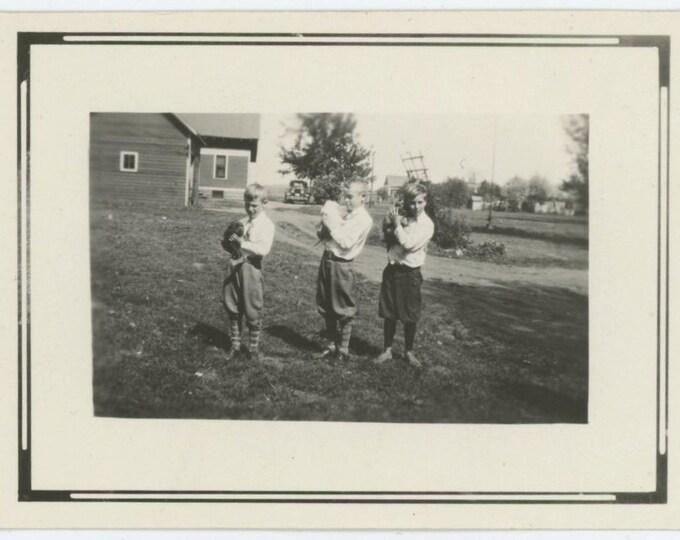 Three Boys with Puppies, 1920s Vintage Snapshot Photo (511435)