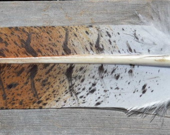 Imitation Western Red Tail Hawk Feather