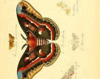Red Moth & Butterflies
