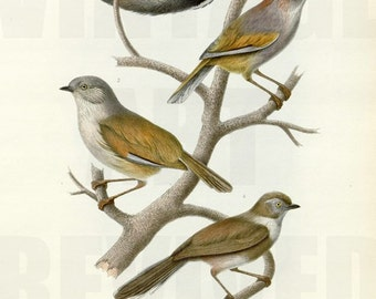 Collection of Birds on Tree Branch Graphic - High Resolution Digital Download No.701