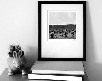 Cacti, Joshua Tree NP, California, USA    black and white landscape photography   fine art   photo   print   home décor   wall art