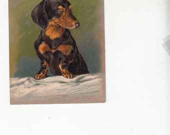 Embossed Dachshund Dog Postcard Poses For You C1910