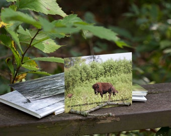 Postcards Set of 4 Postcards Wildlife Print Cards Bison Calf Bird Card Four Cards Can Write on the Back Send a Message Write a Note Nature